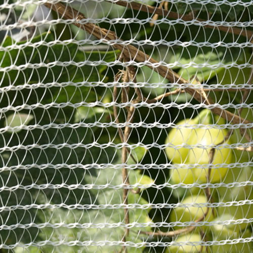 Hail Netting Is The Best Protection Of Fruit Crops And